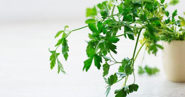 katrina-heppler-ayurveda-herbs